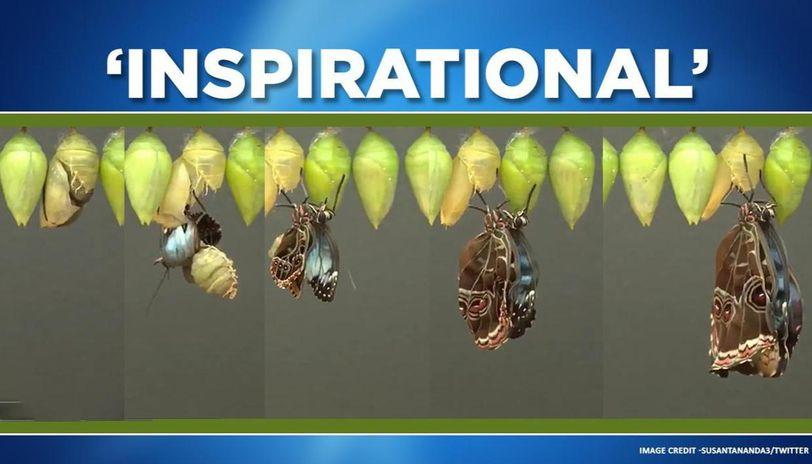 Coronavirus: Butterfly's evolution spreads positivity, amid lockdown