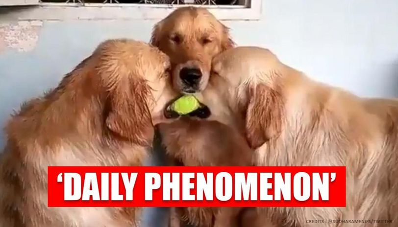 Video of dogs fighting over ball