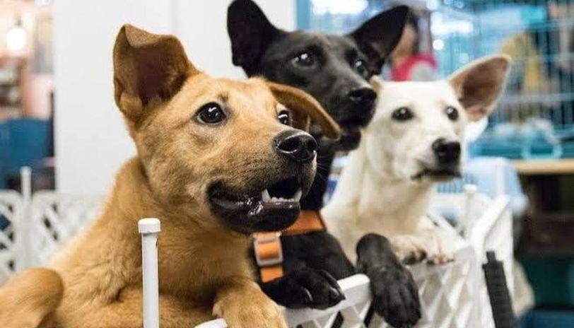 Australia: Animal adoptions increase amid coronavirus lockdown