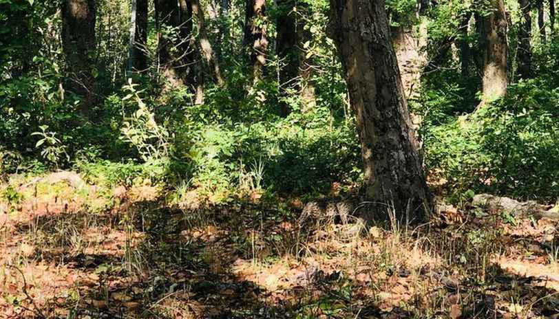 'Spot the cat': Picture of cat camouflaged in forest leaves netizens baffled