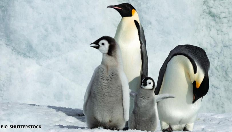 world penguin day