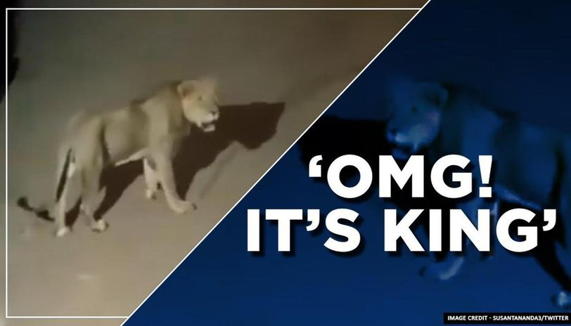 Lion strolls down the streets of Ambardi, Gir, netizens in shock