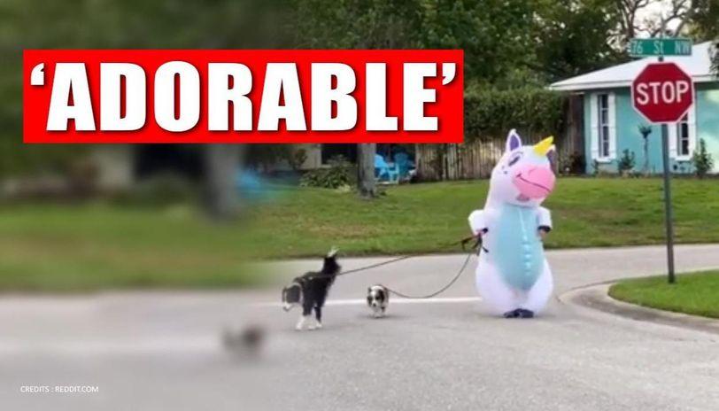 Person dressed as 'unicorn' walks dogs amid lockdown, watch video