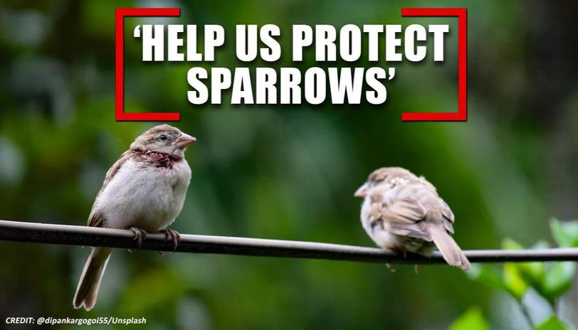 World Sparrow Day