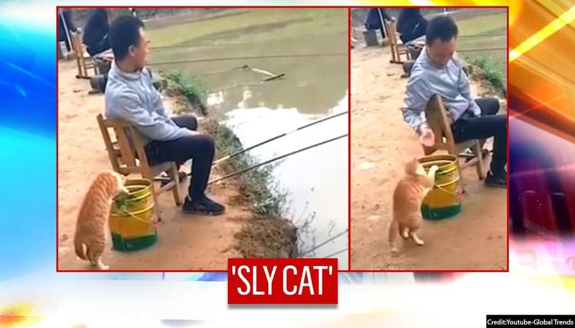 China: 'Clever' cat tries to steal fishes from angler's bucket I watch