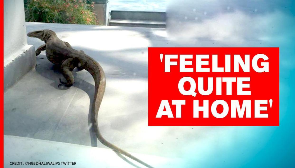 Monitor lizard spotted in a house in Delhi, netizens say 'making the most of lockdown' - Republic World