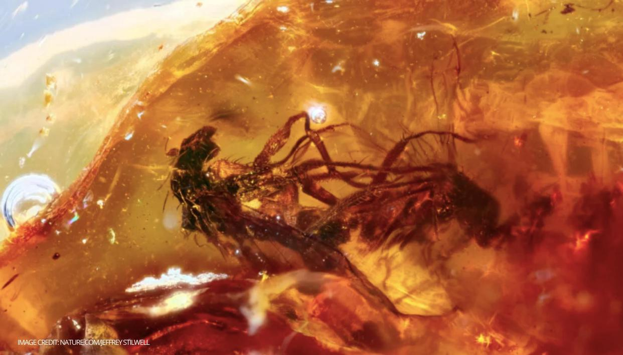 Fossil in Australia shows flies preserved in amber 41 million years ago - Republic World - Republic World