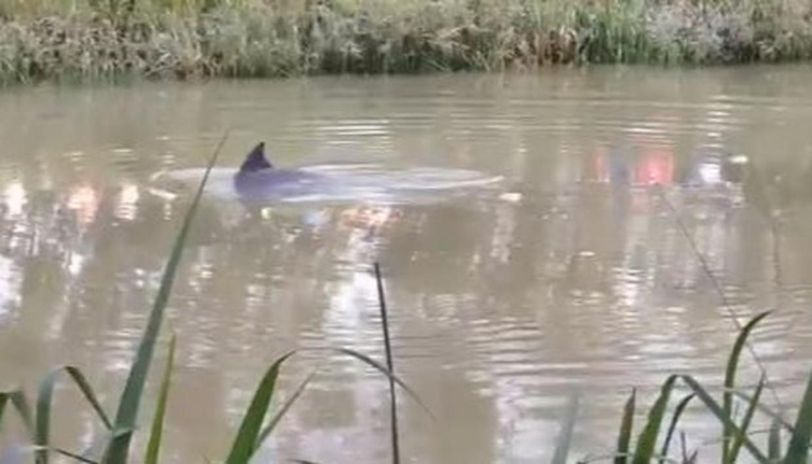 Endangered Dolphin