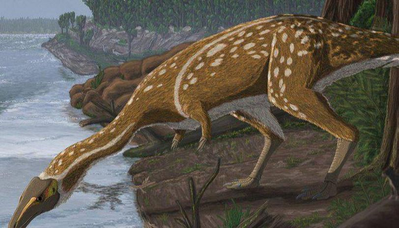 Rare species of toothless dinosaur fossil discovered in Australia