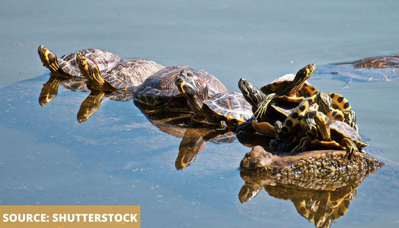 world turtle day wishes