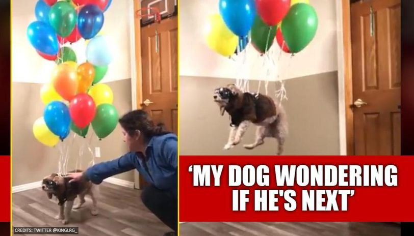 Owner uses balloons to make dog float, netizens highly amused