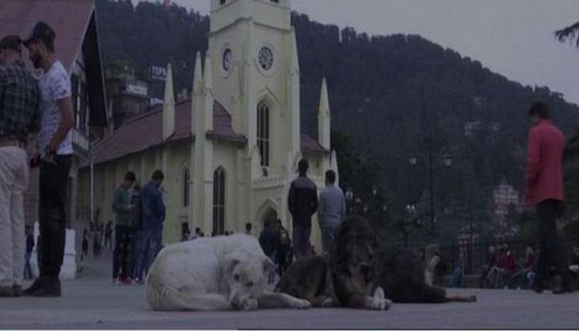 Shimla Municipal Corporation