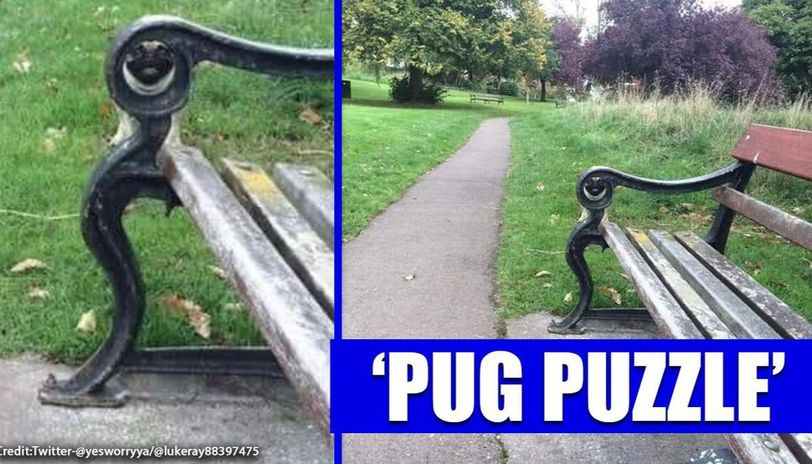 The hilarious pug in this pug puzzle amid lockdown has  Twitter in splits