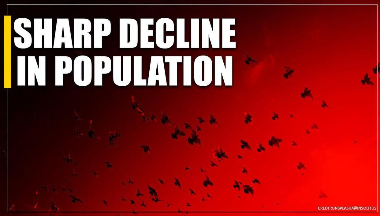'Population of birds in India, on a catastrophic decline': United Nations' COP13 CMS - Republic World