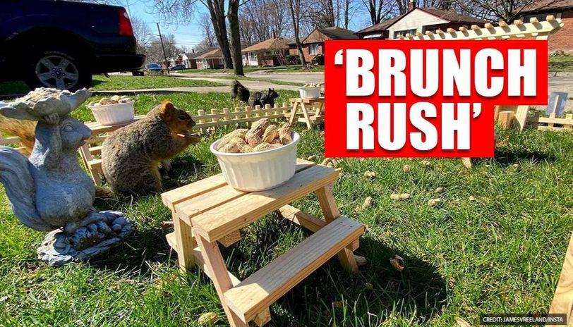 Good News: US man sets up mini restaurant for squirrels in park, netizens impressed