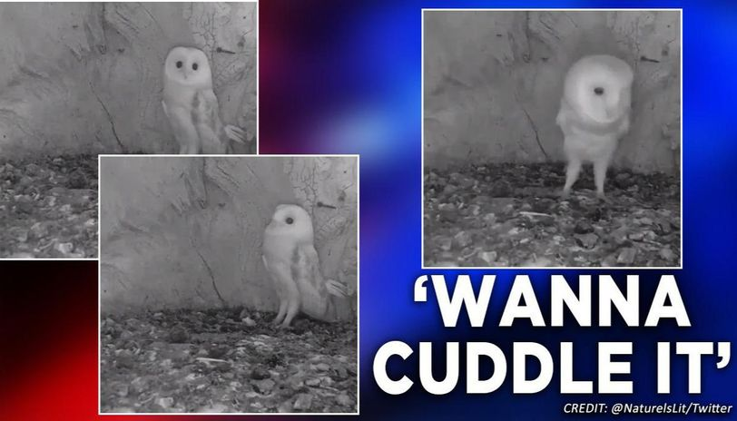 This baby owl's reaction to thunderstorm is making netizens go crazy on social media