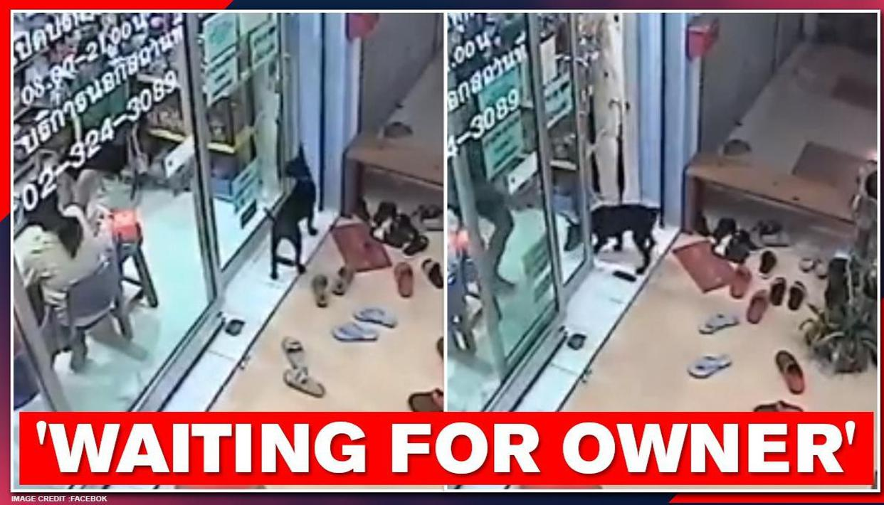 Lost Dog Visits Vet S Clinic After It Couldn T Find Its Way Home