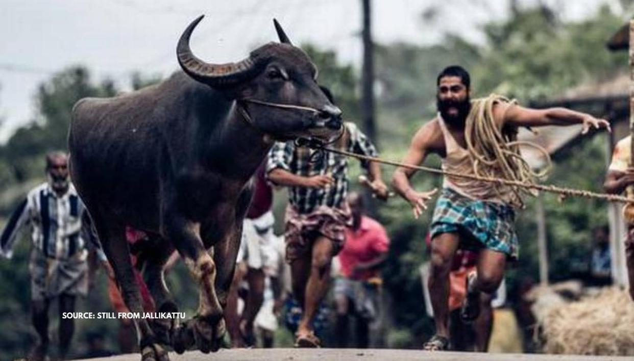 'Jallikattu' movie beats 26 movies to become India's official entry for Oscars 2021