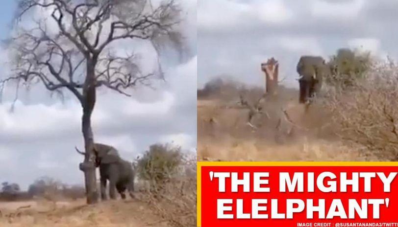 Video shows elephant breaking a tree into half, netizens stunned