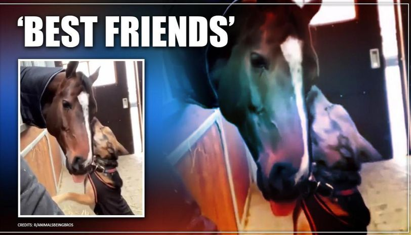 Dog and horse's adorable friendship is winning netizens hearts. Watch