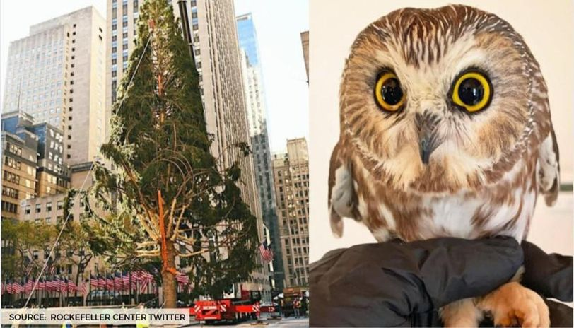 what happened to the rockefeller center tree