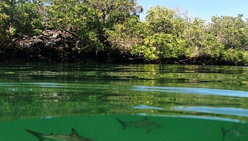 Coronavirus infects four in world heritage site Galapagos Islands