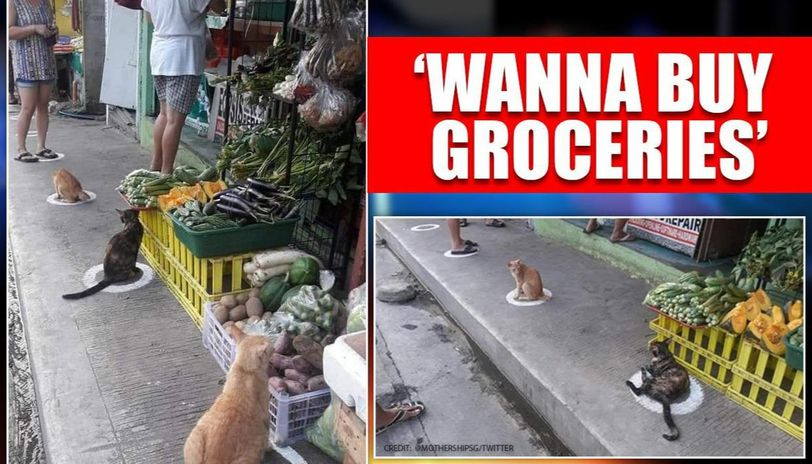 Singapore: Cats sit on 'social distancing markers' as country relaxes COVID-19 lockdown