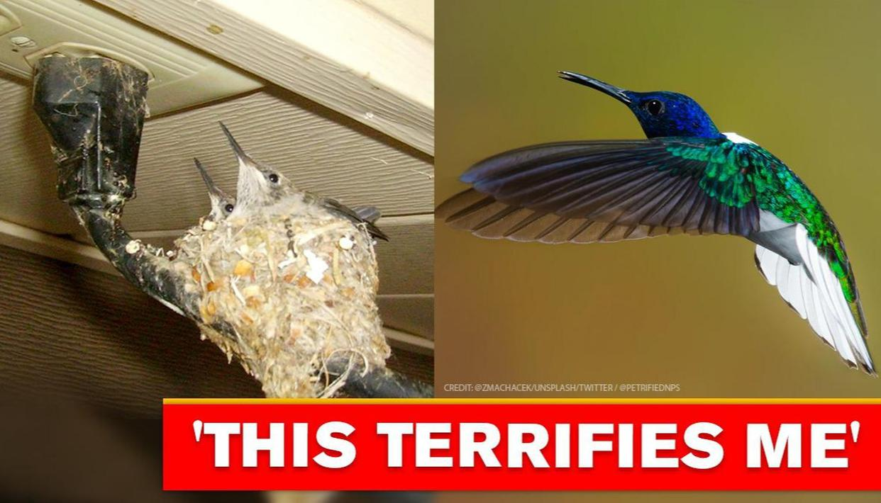 Hummingbird nests at risky place in Arizona national park, netizens worried