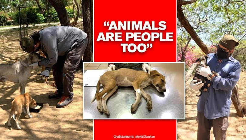 Mohit Chauhan feeding strays daily, buries puppies, rescues injured as celebs ignore pleas