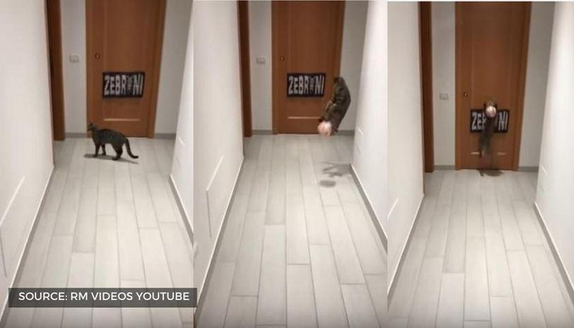 youtube goalkeeper cat