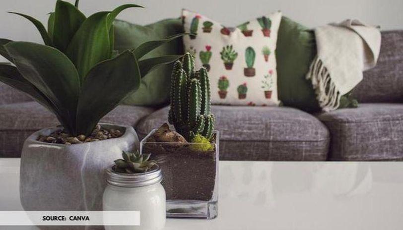 home decor ideas with plants