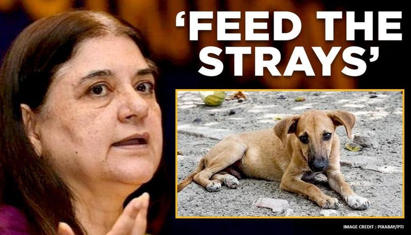 Maneka Gandhi urges people to feed stray animals