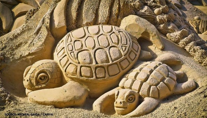 world turtle day activities