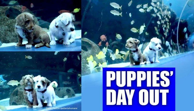 Puppies explore Georgia Aquarium  after it shut due to COVID-19 outbreak
