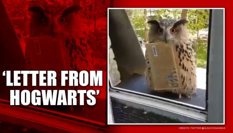 'Its Hedwig!': Video of owl delivering mail leaves netizens in 'Harry Potter' nostalgia