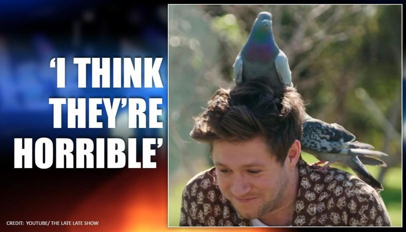 Irish Singer Niall Horan gets pooped by pigeons as he tries to hold them