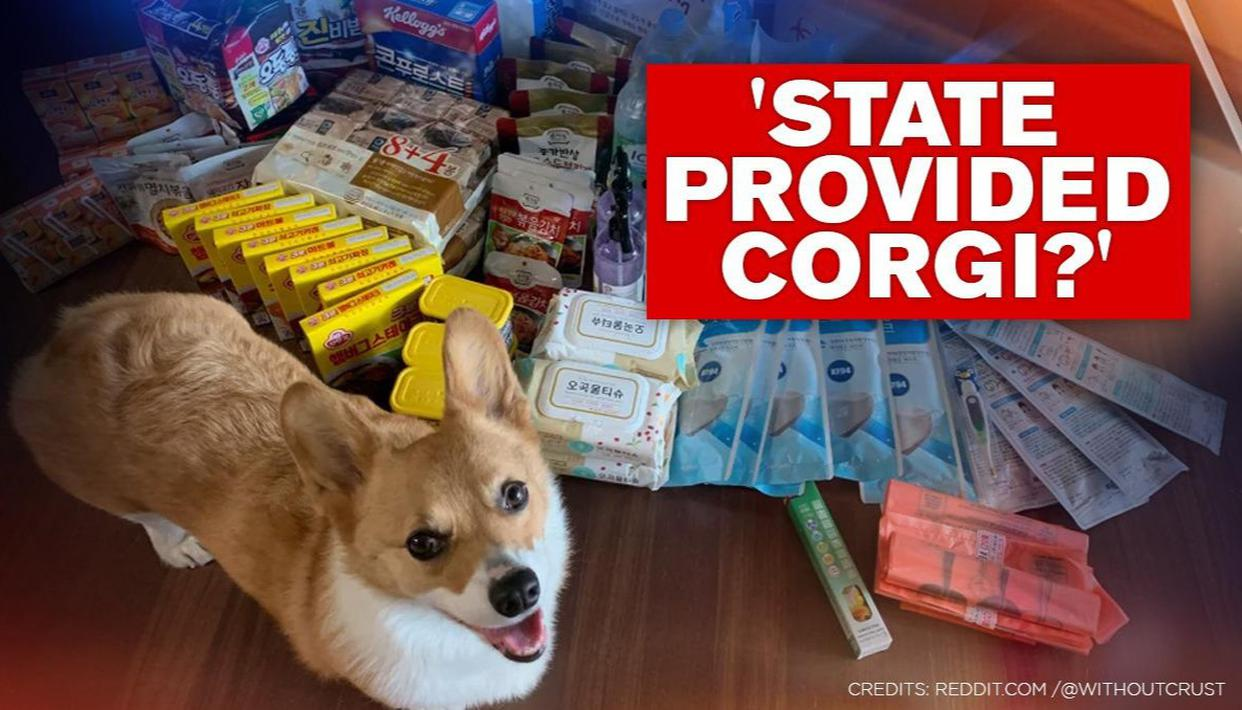 Man Posts South Korean Govt S Care Package Contents Netizens Ask They Gave You A Dog Republic World