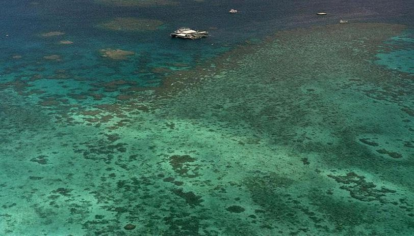 Scientists report worst ever coral bleaching on record