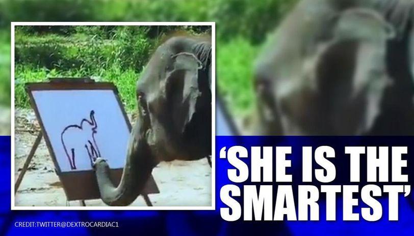 Elephant painting self-portrait stuns internet, netizens say 'stop animals cruelty'