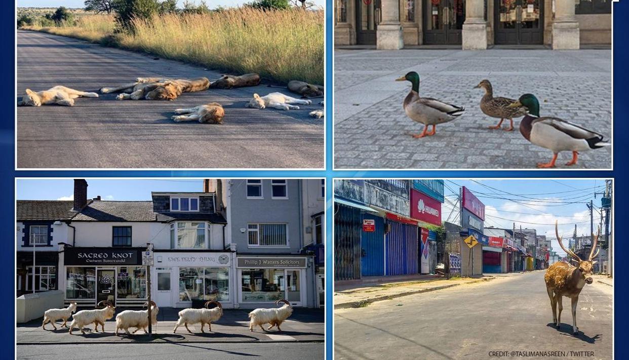 COVID-19: Animals, birds roam freely on streets amid lockdown - Republic World