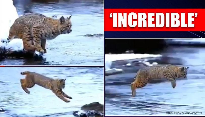 Gravity'Gravity was disabled': Lynx's long jump leaves internet stunned