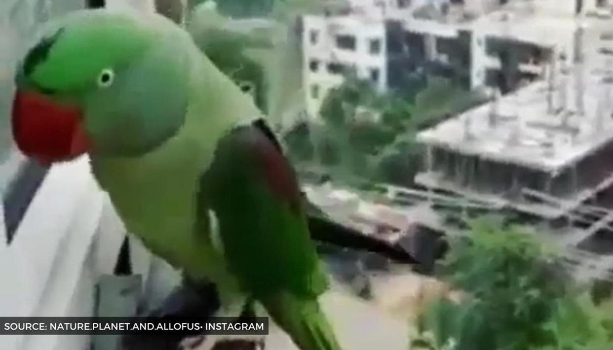 Funny Parrot Video Dominates Social Media As Fans Keep Sharing It Watch There's a new character this week on how to keep a mummy: funny parrot video dominates social
