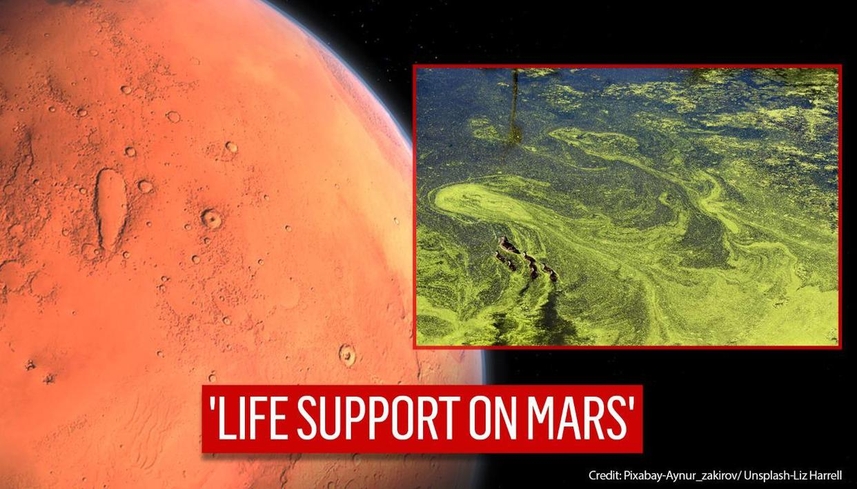 Blue-green algae could help keep humans alive on Mars, says study - Republic TV