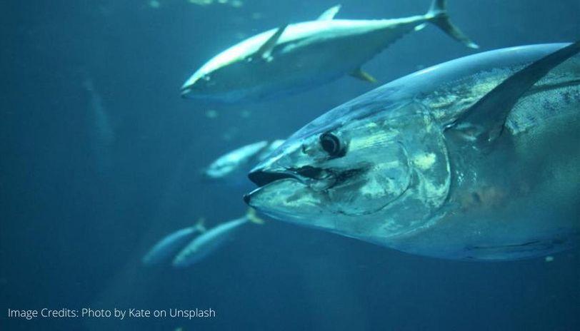world tuna day 2020