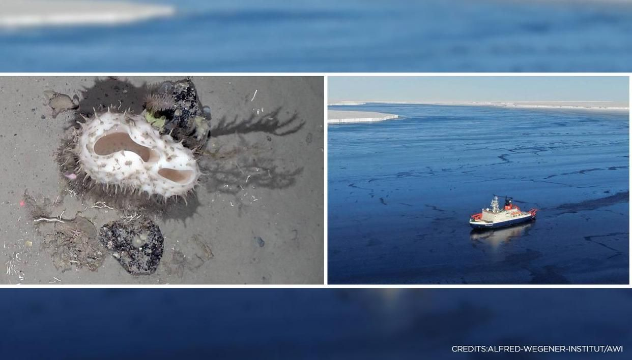 Scientists are finding 'rich biodiversity' beneath a broken iceberg, look at the pictures