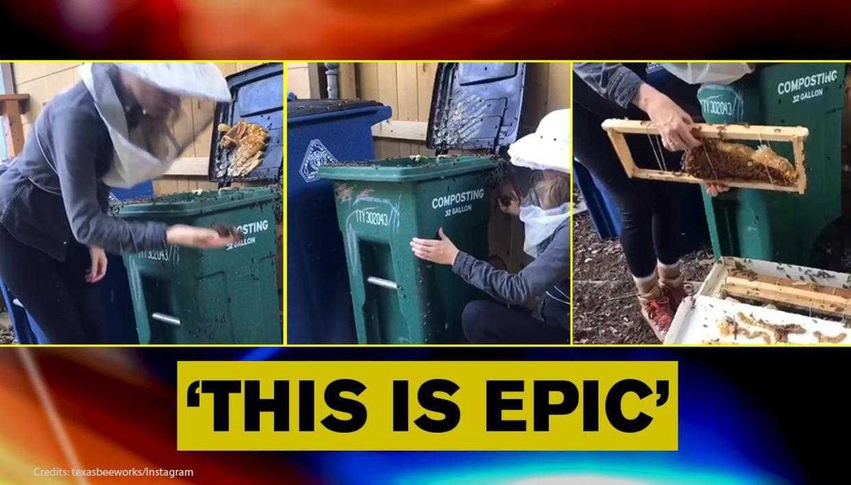 Beekeeper shares video of herself removing bee colony from compost bin at a school; Watch - Republic World