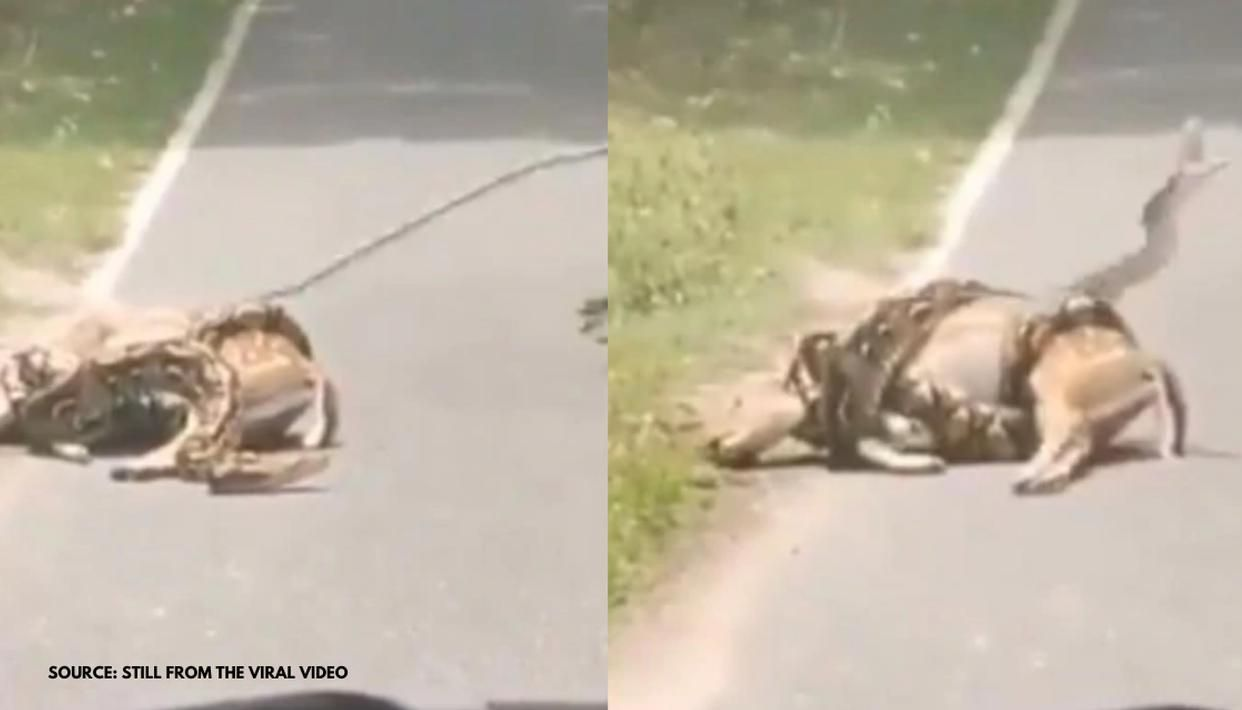 Man rescues deer trapped in snake's death grip, netizens divided over viral video: Watch - Republic World
