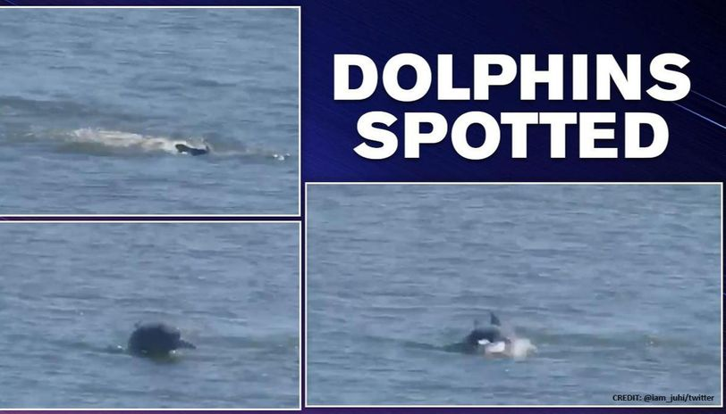 Dolphins skimming in Mumbai Coast, owing to substantial drop in Industrial Activity amidst