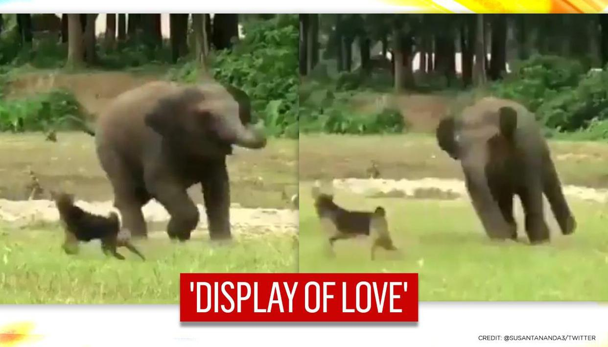 'Gleeful' baby tusker & canine play together in green meadow, netizens say 'Thor and Hulk'