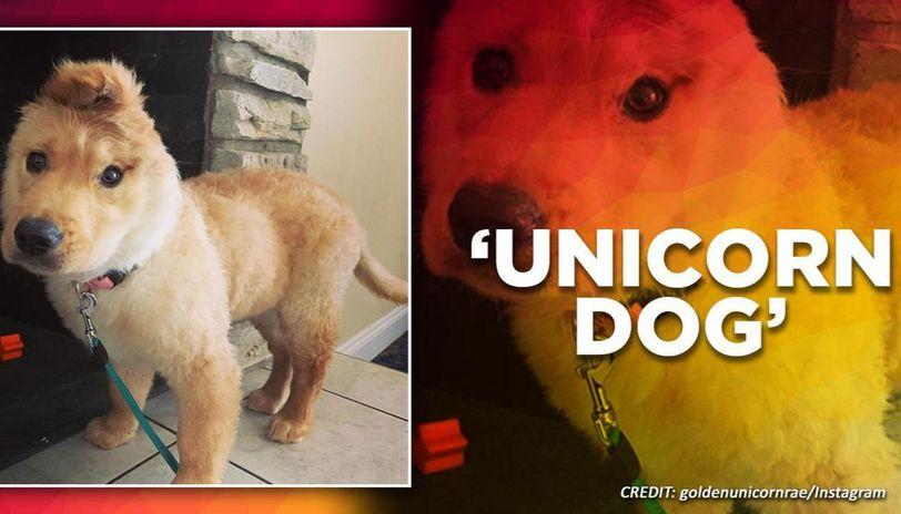 Netizens call unicorn dog 'absolutely perfect' little pupper